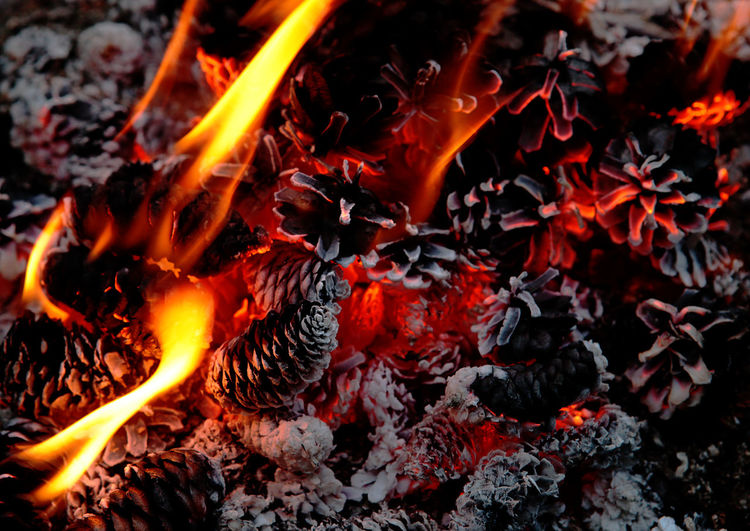 Beautiful campfire from pine cones. New Years card. Heat - Temperature Fire Fire - Natural Phenomenon Burning Nature No People Flame Orange Color Close-up Firewood Glowing Log Wood - Material Wood High Angle View Bonfire Motion Outdoors Night Land Campfire New Year Pine Cone Winter Meditation