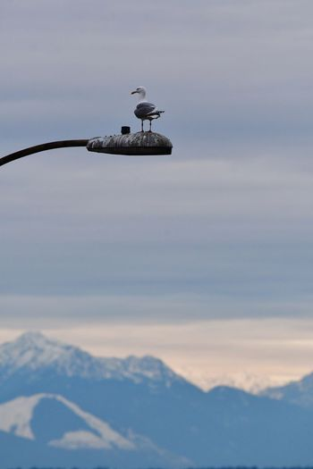 View of bird perching on mountain against sky