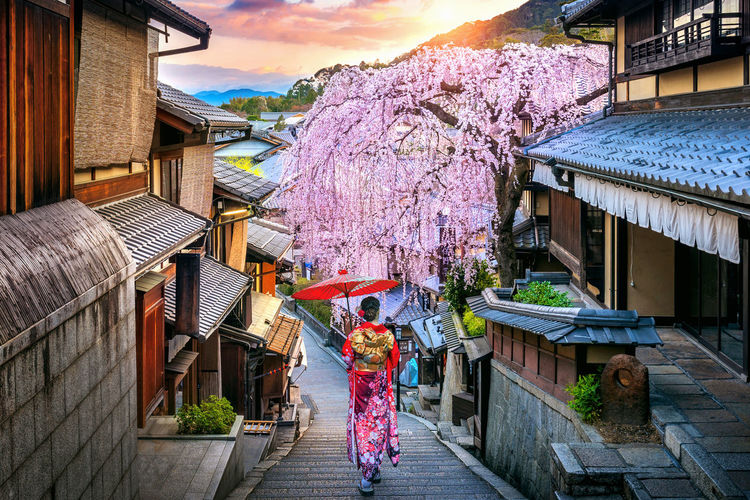 Woman wearing japanese traditional kimono walking at Historic Higashiyama district in spring, Kyoto in Japan. Architecture Built Structure Building Exterior Real People Building Flower Nature One Person Day Flowering Plant Lifestyles Traditional Clothing Plant Women Rear View Kimono City Adult Outdoors Cherry Blossom