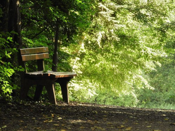 Green Green Color Nature Bench Silent Romantic Forest Forest Photography Tree Wooden Domestic Garden Park Bench Greenery Blossoming  Flora