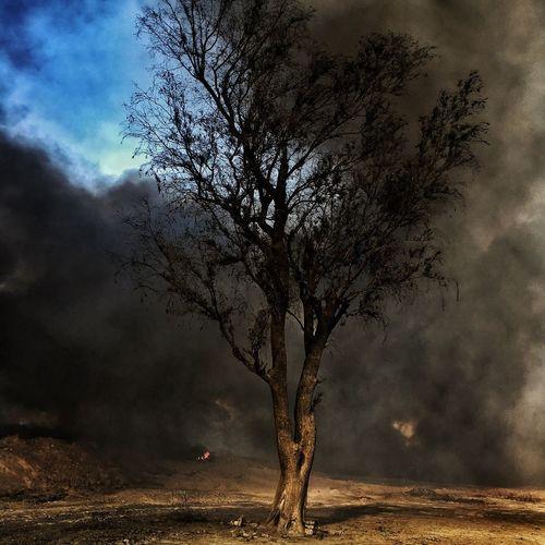 Tree Nature Landscape Road To Mosul Al-Qayyarah Conflict Middle East Conflictzone Mosul Isis War Environmental Issues Environment Environmental Damage Pollution An environmental tragedy in Al-#Qayyara, the oil wells still burning and releasing a toxic thick black cloud for more than 3 months and the process to stop it, is slow. / Una tragedia de salud y para el medio ambiente en Al-Qayara, los pozos de petróleo aún siguen incendiados y liberando una nube negra tóxica, por más de 3 meses y el proceso para detenerlo es lento. #RoadtoMosul #MosulOffensive #photojournalism #snapseed #iphoneography #Iraq #war #everydayclimatechange #JuanCarlos #environment #2016copyright Art Is Everywhere Art Is Everywhere The Photojournalist - 2017 EyeEm Awards