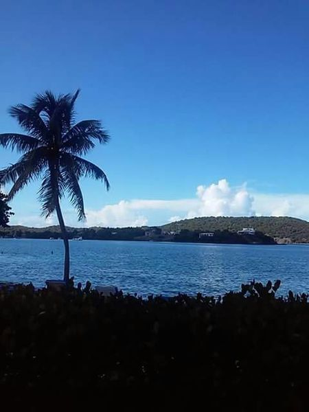 Stthomas Pic Palm Trees Water