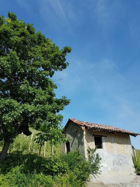 Architecture Building Exterior Built Structure House Tree Sky Outdoors Day No People Nature Beauty In Nature Travel Destinations Langhe Piedmont Italy Vineyards  Nebbiolovineyards Rural Building