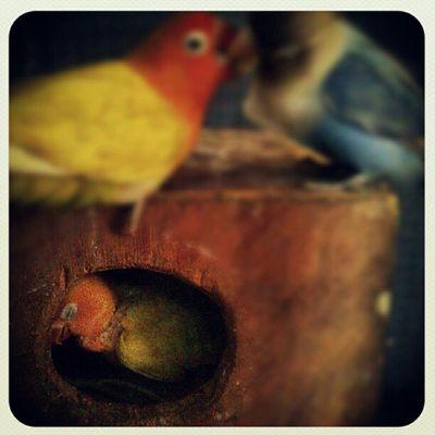 when you sleeping Romantic Seventeenplus Makingout Bird Family Puppies Nest EarlybirdFX Instagram