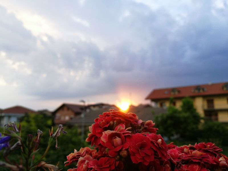 Sunset Sunset In My Village Flower Sunset Balcony View Balcony Life Nature My Love