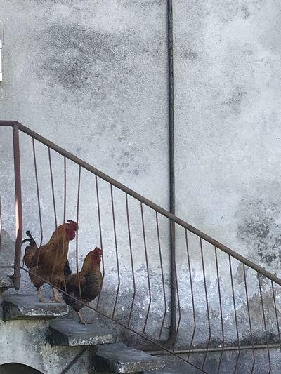 Birds perching on railing against wall