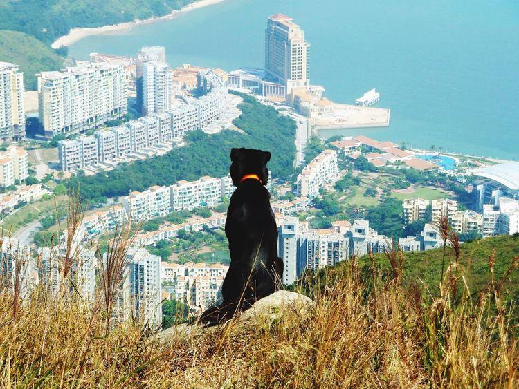 Dogs Dog Dog Walking Dog Photography Walking Around Walking The Dog Hiking Hikingadventures Black Dog Outdoors Outdoor Photography Panorama Hong Kong Discovery Bay Lantau Island Sunny Rear View Landscape Day Out Scenics Sea