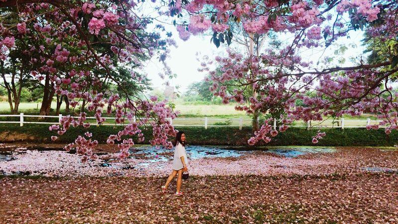 อยากมีชีวิตเป็นสีชมพูกับเค้าบ้าง 🌸 Beauty In Nature Nature EyeEm Nature Lover
