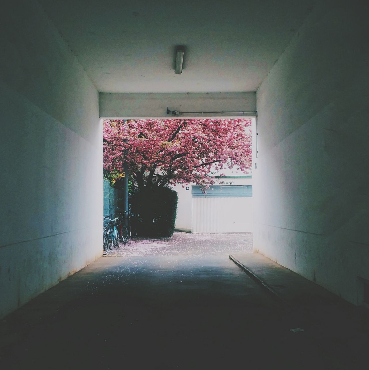 Blooming tree through building archway