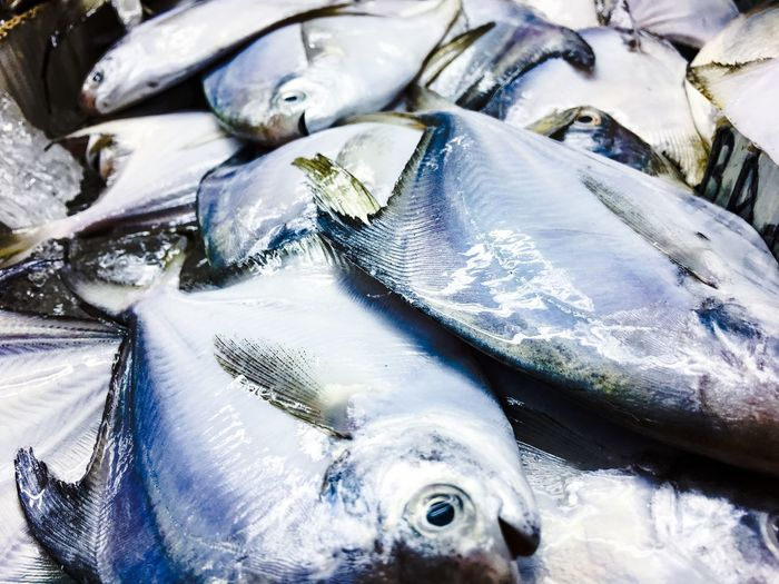 Close-up Cold Temperature Day Fish Fish Market Food Food And Drink For Sale Freshness Healthy Eating Ice Market No People Outdoors Raw Food Retail  Seafood