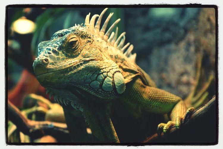 Гошан, любимый мой дракон <3
