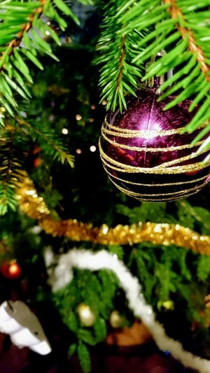 Christmas Tree Christmas Decoration Celebration Tree Illuminated No People Christmas Lights Tradition Night Green Color Nature Home Sweet Home Christmas Tree Decoration Happy New Year Sony Xperia Photography. New Year 2017 Angelina B NewYear New Year Party New Year Celebration Christmas Toy 2017 🍾🎇🎉❤ Needle - Plant Part Close-up Christmas Ornament