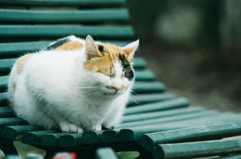 Close-up of cat resting on bench