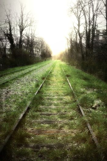 Paris Mobile Photography La Petite Ceinture The Path Less Traveled By Pointer Footwear