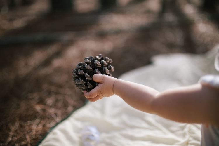 Midsection Of Baby Holding Pine Cone