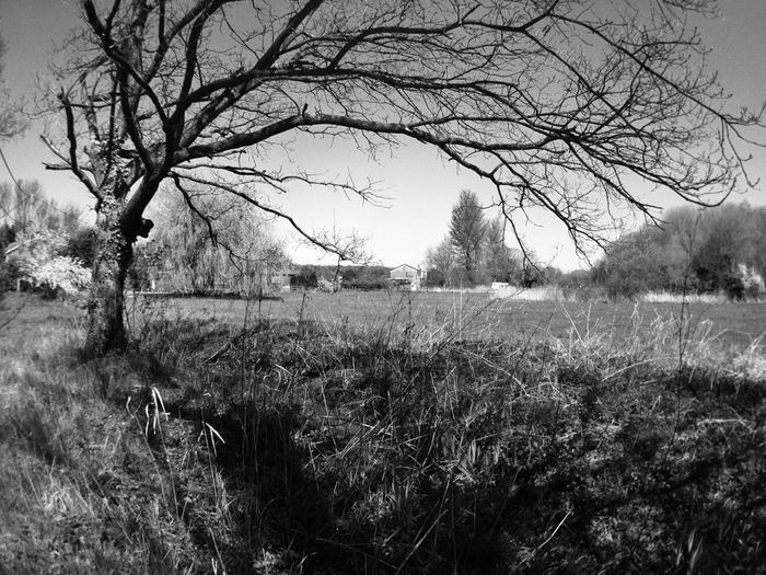 IPhoneography Blackandwhite Lone Tree AMPt_community