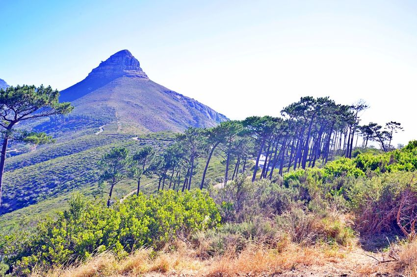 Plant Tree Beauty In Nature Tranquility Scenics - Nature Tranquil Scene Mountain Landscape Land No People Non-urban Scene Environment Outdoors Mountain Peak Lions Head, Cape Town