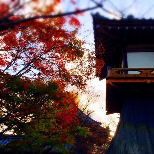 Autumnsky Sky Collection Colors Of Autumn EyeEm Nature Lover Autumn Collection