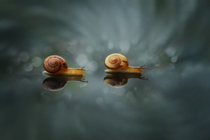 Snail Races EyeEm Selects Snail Snail Collection Snail Photography Snailfriend Snails Adventure Bokeh INDONESIA Race Animal Themes Nature Insect Water Outdoors