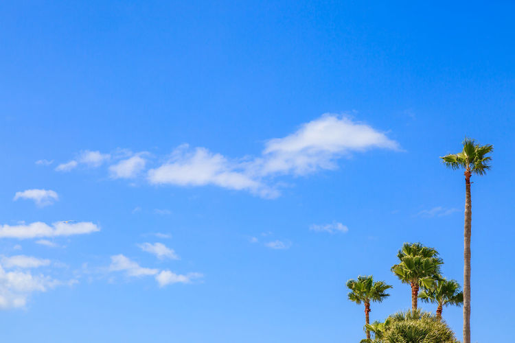 Palm Trees and a Blue Sky Copy Space Sunny Tampa Trees USA Day Florida Landscape No People Outdoors Palm Trees Sun Tall Tropical