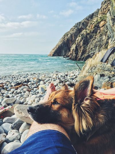 High angle view of dog on rock by sea against sky