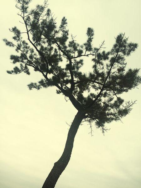 외로움의 나무 한그루