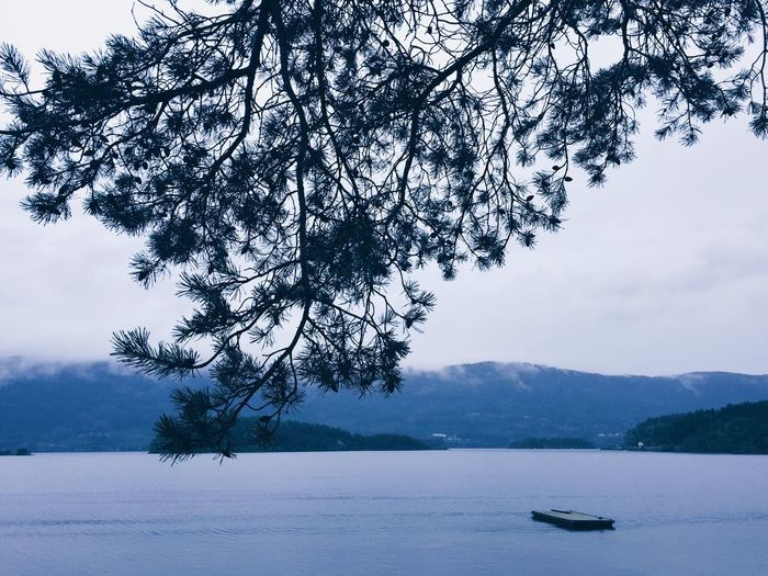 Blue nordic lakes and fjords Scenics Nature Water Tree Tranquility Beauty In Nature Tranquil Scene Outdoors No People Mountain Day Cold Temperature Branch Lake Lakeside Lake View Blue Fjord Fog Mountain Range Pine Tree Foggy Foggy Weather Wilderness Nordic Countries Breathing Space The Week On EyeEm