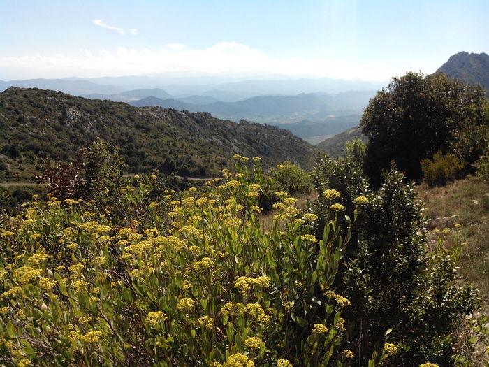 Vue du chateau de Quéribus Paysage Montagne Landscape Mountains