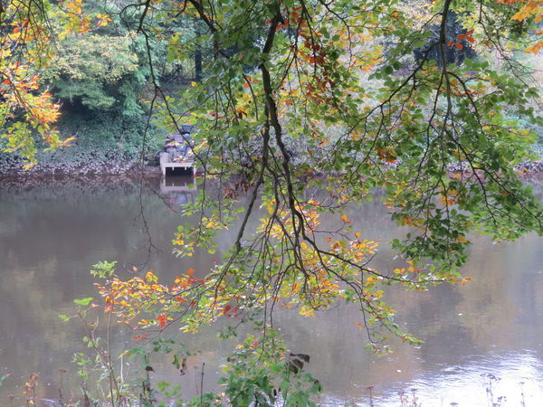 Autumn Fisherman Leaf Nature Outdoors Plant Reflection River Bank View Tree Water
