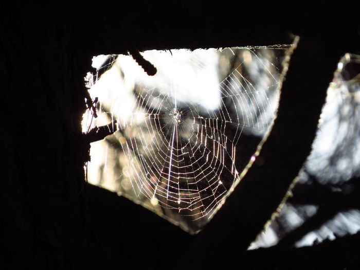 Altweibersommer Autumn Caught In A Web Labyrinth Sunlight Animal Themes Arachnid Arthropod Close-up Complexity Fall Focus On Foreground Fragility Indian Summer Intricacy Pattern Selective Focus Spider Spider Web Spiderweb Spiderweb In The Sunshine Spiderwebs Sunshine Vulnerability  Web