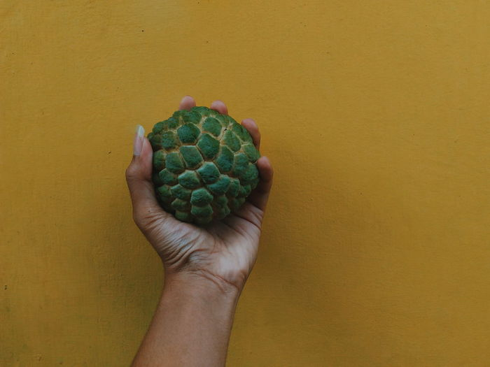 Close-up of hand holding custard apple against yellow wall