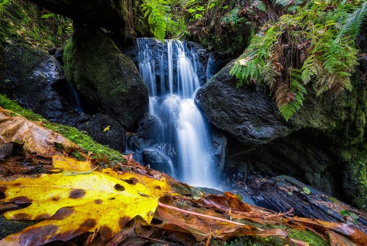 Autumn at Trillium Falls, Orick, California. Colors Creek Adventure Beauty In Nature Day Ferns Forest Holiday Landscape Motion Nature No People Outdoors Rock - Object Scenics Streamzoofamily Tourism Travel Travel Destinations Tree Vacations Water Water_collection Waterfall Waterfall_collection