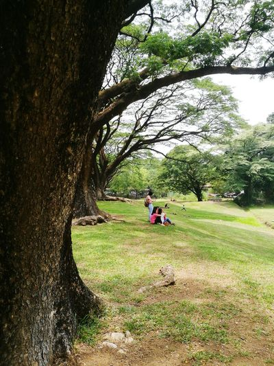 under an acacia tree at the edge of the Sunken Garden EyeEm Best Shots Eye4photography  Eyeem Philippines Friendship Relaxation Sunken Garden UP Diliman Tree Men Togetherness Women Field Sky Grass Adventures In The City Focus On The Story EyeEmNewHere Friend This Is My Skin The Street Photographer - 2018 EyeEm Awards The Portraitist - 2018 EyeEm Awards The Great Outdoors - 2018 EyeEm Awards The Traveler - 2018 EyeEm Awards The Still Life Photographer - 2018 EyeEm Awards The Creative - 2018 EyeEm Awards The Photojournalist - 2018 EyeEm Awards Creative Space Summer Road Tripping The Troublemakers #urbanana: The Urban Playground Summer In The City My Best Travel Photo A New Beginning Autumn Mood