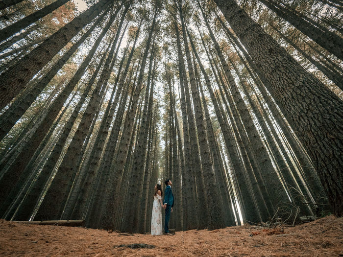 Full Length Of Young Couple Standing Back To Back While Standing Amidst Trees In Forest