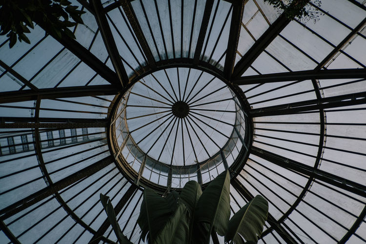 Hortus Botanicus Built Structure Low Angle View Pattern Architecture Geometric Shape Shape Circle No People Directly Below Indoors  Dome Skylight Sky Day Nature Ceiling Full Frame Glass - Material Sunlight Design Cupola Concentric Luxury