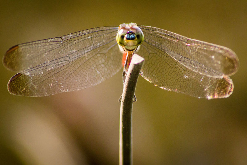 Close-up of dragonfly on flower