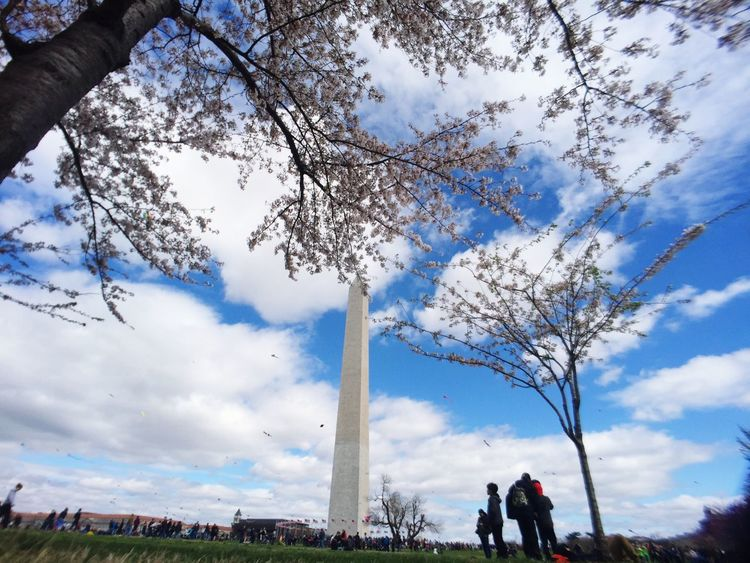 Sky Tree Real People Travel Destinations Lifestyles Cloud - Sky Outdoors Tourism Low Angle View Women Leisure Activity Day Men Nature Vacations Large Group Of People Architecture People Adult Tidal Tidal Basin