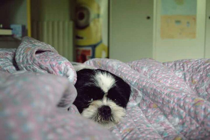 El Me Amor Relaxing Coperta Eva Dog Amoremio Perro Dogslife Animals Puppy Mivida MyRoom Bedroom Treviso Dog Love