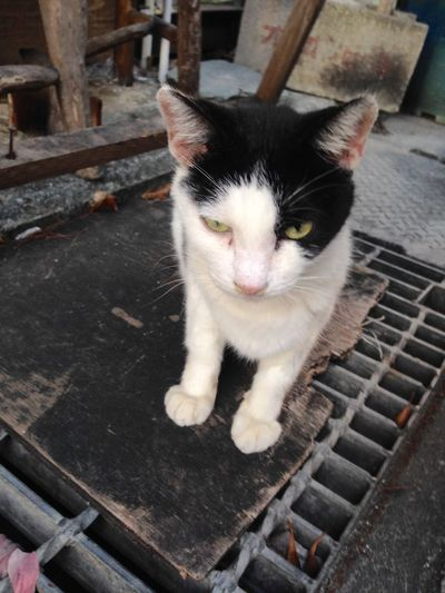 目つき 怖 睨んでる顔がかわいい スナップ Snap Naha-city 那覇 Cat Okinawa 沖縄 日本 猫 Japan Cute 南国のネコ 可愛い ねこ