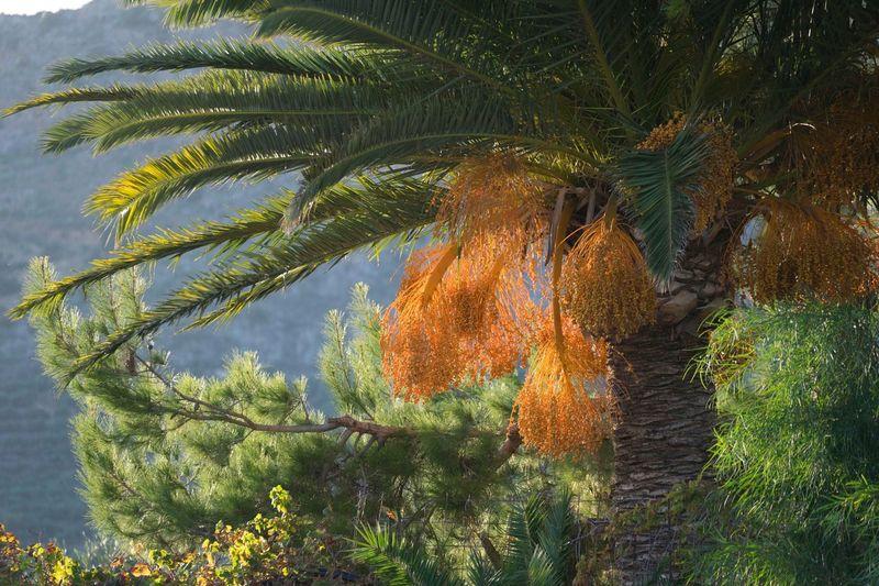 Palm tree against plants