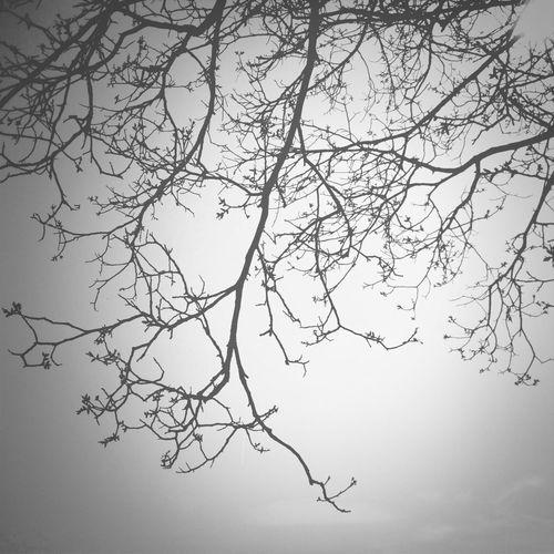 Blackandwhite EyeEm Best Shots Trees