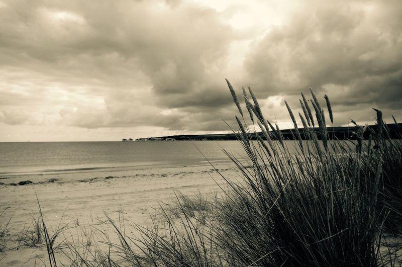 Studland Bay, Dorset Studland Studlandbay Studlandbeach Beach Dunes Sand Dunes Sand Dorset Dorset Coast Poole, Dorset Poole Harbour Poole Purbecks Isle Of Purbeck Late Summer Sky Sea Seaside Coast Coastline Grass Reeds