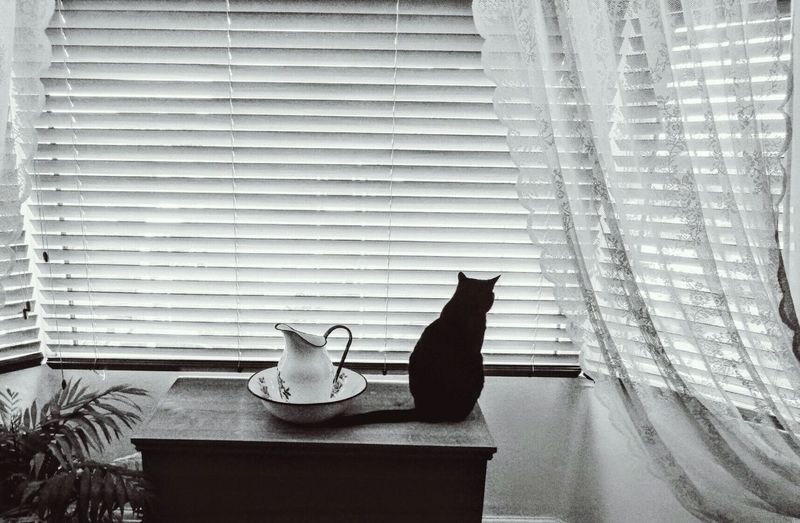 Rear View Of Cat Sitting By Jug On Table Against Window Blinds At Home