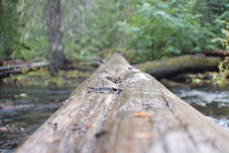Walk the log! Nature Tree Trunk Outdoors Oregonlife Enjoying Life Oregonexplored Beauty In Nature Campinglife Nikond3300