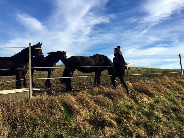 Auf der Weide... Horses Black Beauty Pferde Nature Animal Themes Peaceful View Wolken Himmel Und Wolken Weide Herbst Beauty In Nature