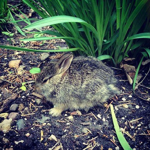 Awww it's a bunny<3