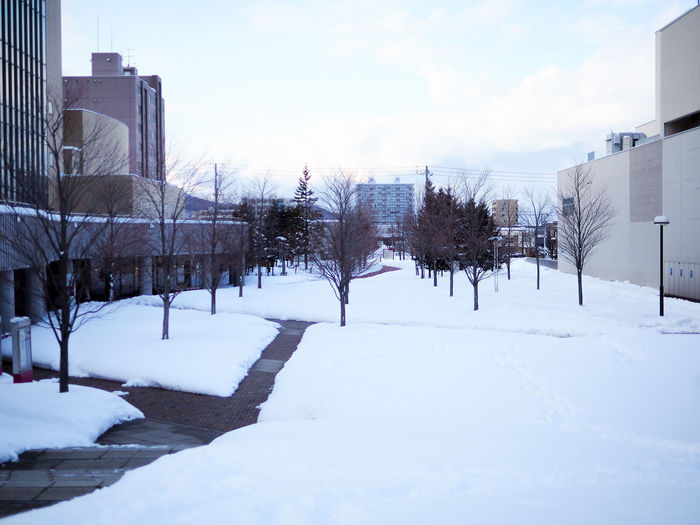 Snow covered trees and buildings against sky