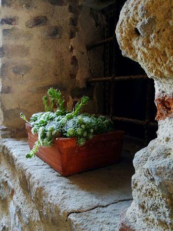 Brick Wall Flower San Leo Italy🇮🇹 Castel Window