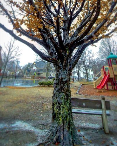 Tree Trees Leaves Park Dog Park Spring?