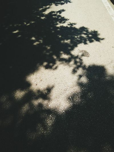 Shadow Focus On Shadow Sunlight Textured  Day Outdoors No People Close-up Asphalt Road Asphalt Pavement Asphalt Street Sunlight & Shadow EyeEm Nature Lover EyeEm Selects EyeEm Gallery EyeEm Best Shots The Great Outdoors - 2017 EyeEm Awards Backgrounds Pattern Textured  Full Frame Beauty In Nature Sunlight And Shadow Tree